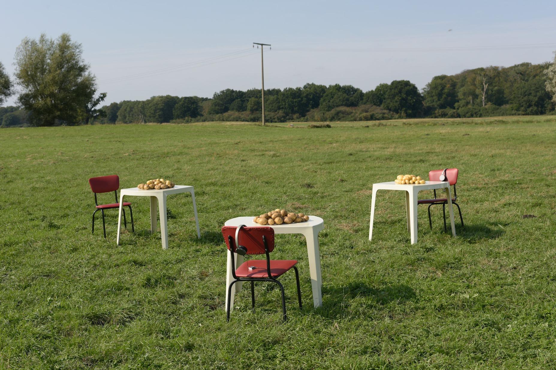Foto von Kartoffelaktion in Mecklenburg