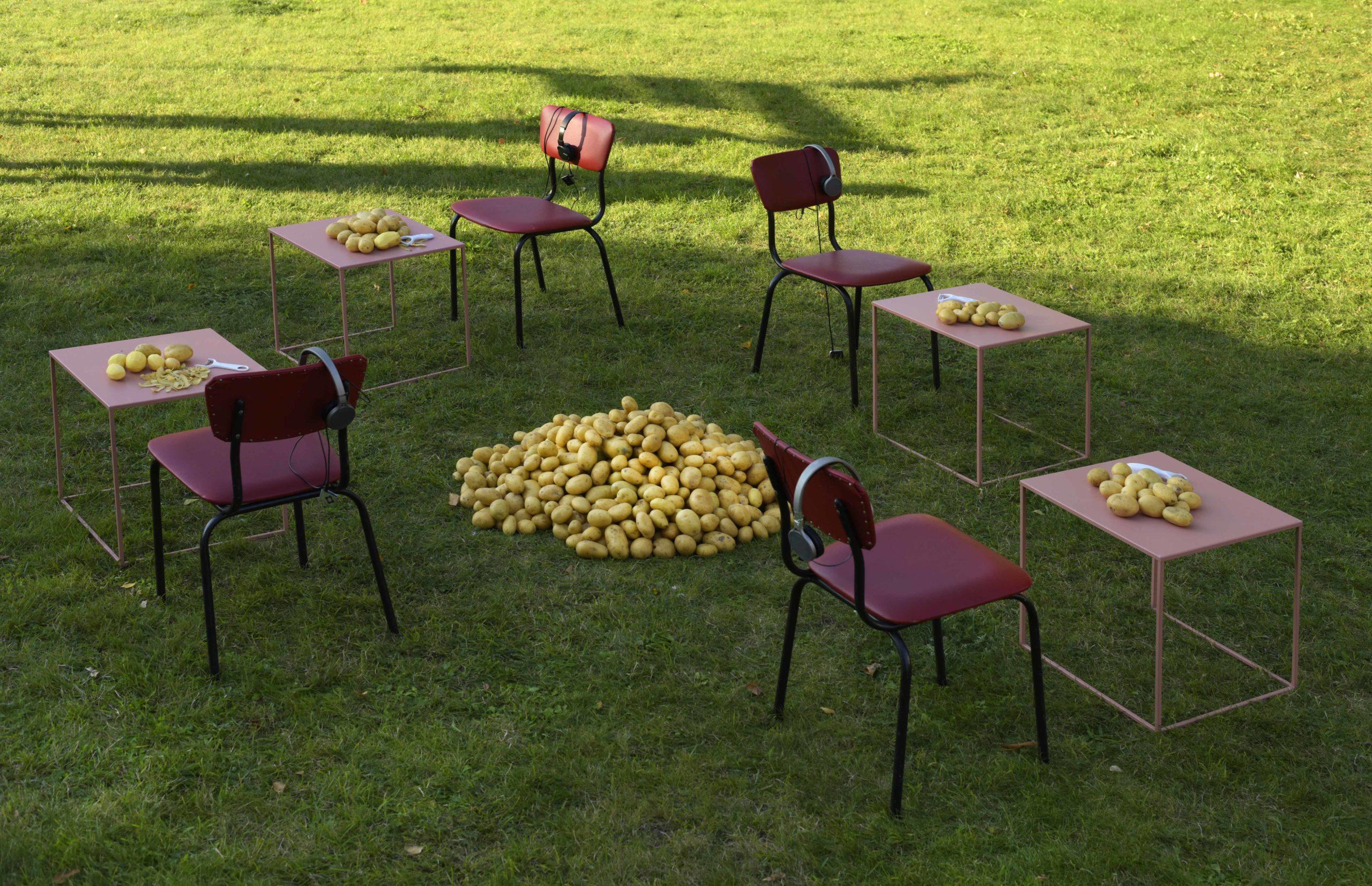 anderes Foto von Kartoffelaktion in Mecklenburg